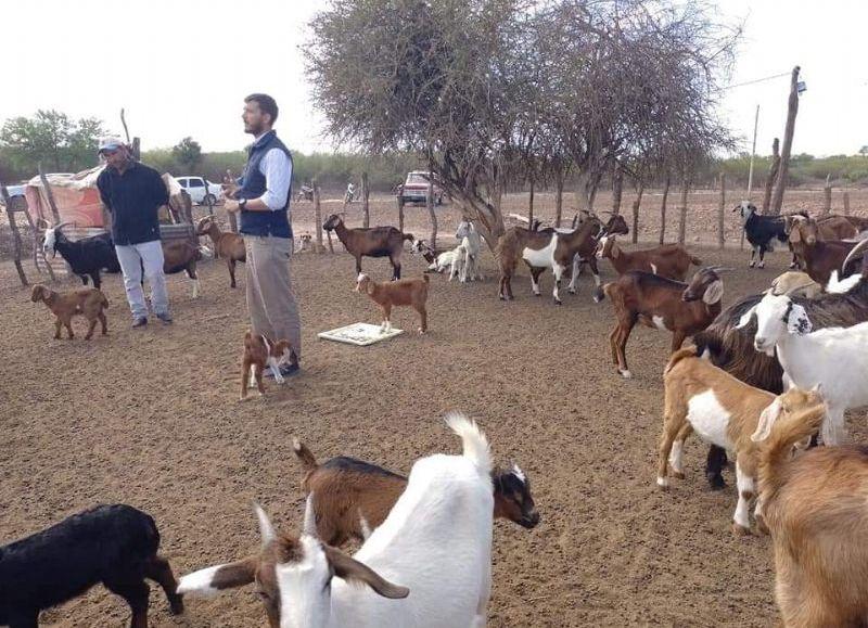 El técnico detalló que, para definir las acciones del programa, se evaluó el sistema de cría y producción de cabras, el nivel de tecnificación productivo, la infraestructura en cada puesto o establecimiento.