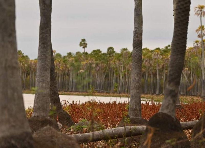 El futuro Parque Nacional tendrá una superficie de 5.600 hectáreas con un espejo de agua de más de 1.000 hectáreas cubriendo toda la laguna El Palmar.