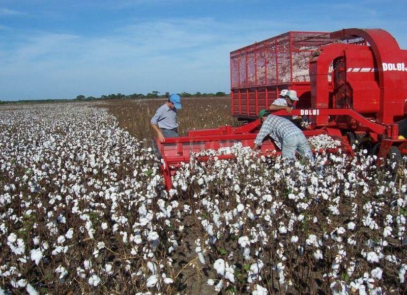La provincia del Chaco presenta un buen ritmo de cosecha en el ámbito de la delegación de Charata, y en Sáez Peña se encuentra en su etapa final.