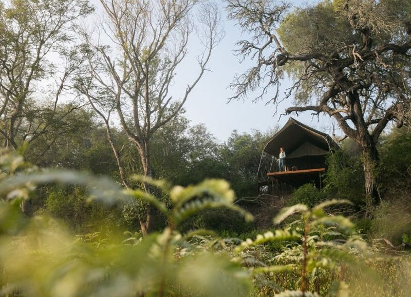 Este emprendimiento forma parte de un proyecto que llevan adelante en forma conjunta el Instituto de Turismo del Chaco y la Fundación Rewilding Argentina.