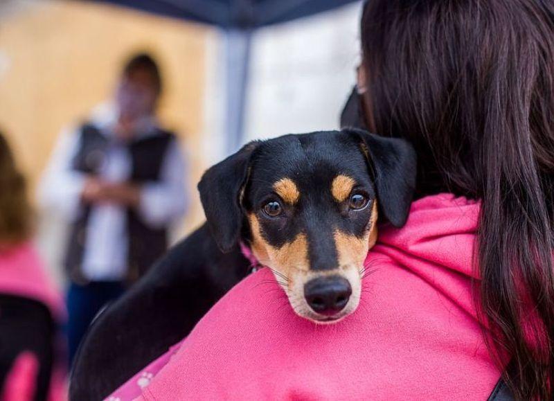 En la última jornada se realizaron castraciones a 235 mascotas.