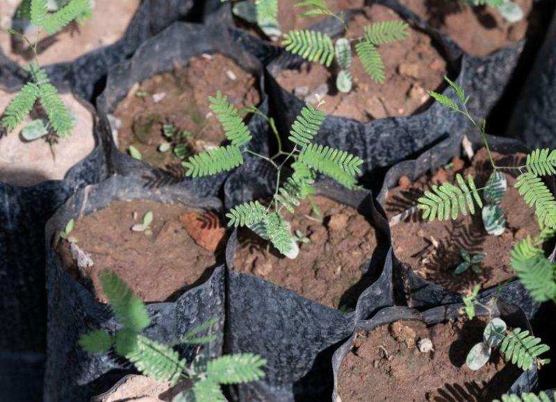 Los proyectos proyectos están orientados al cultivo orgánico y comunitario; acceso al agua para familias rurales y a salvar al yaguareté en la región, entre otros.