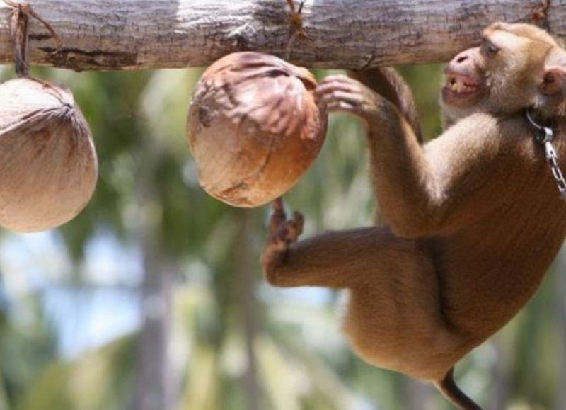 Un ciudadano estadounidense se encuentra hospitalizado tras contraer la viruela del mono y otro chino ha muerto como consecuencia del virus B.
