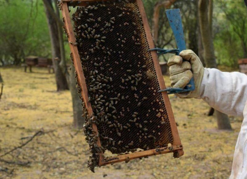 Chaco produce aproximadamente 1200 toneladas de miel por año, lo que genera ingresos por más de $200 millones.