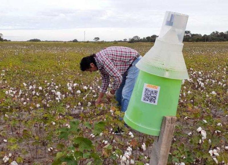 Nueva tecnología aplicada al monitoreo del picudo del algodonero